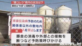 豚コレラは石川県で発見されているのか